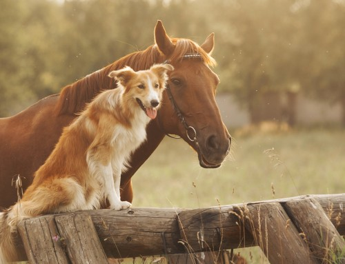ELEKTROTHERAPIE beim Hund